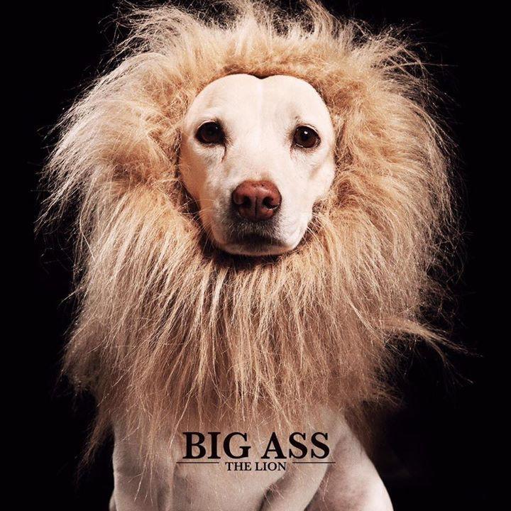 CD Big ASS The Lion